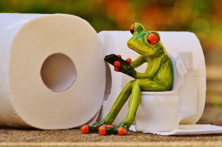 frog, toilet, loo-1037248.jpg